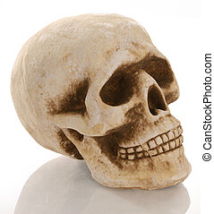 skull skeleton with reflection isolated on white background
