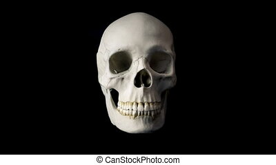Skull Talking Loop - Front View - Front view of human skull...