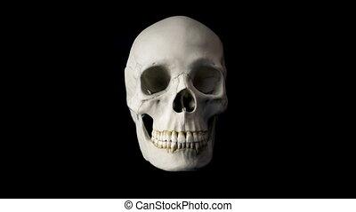 Skull Talking Loop - Front View - Front view of human skull...