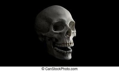 Skull Talking Loop - Side View - Human skull on black...