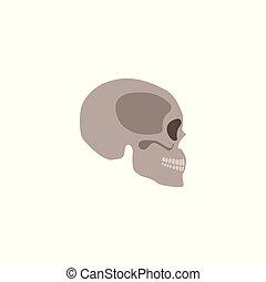 Skull the head bone of the human skeleton flat vector illustration isolated.