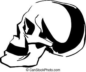 Skull - Black and white sketch of skull