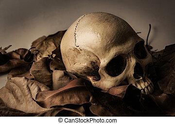 Skull with Dry leaf , still life