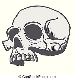 skull3.eps