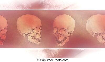 Skulls Framed Spooky Loop