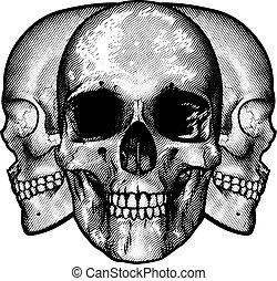 Skulls Graphic Design