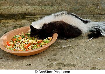 skunk rayado, o, mephitis