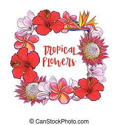 skwer, liście, tropikalny, dłoń, kwiaty, ułożyć