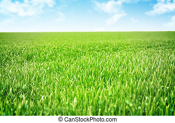 Sky and grass background, shallow field of view