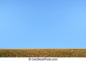 Sky and Grass