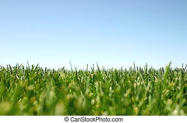 sky and grass - grass and sky