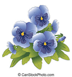 Sky Blue Pansies - Sky blue Pansy flowers (Viola tricolor...