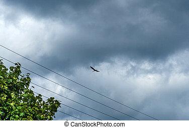 sky., fliegendes, bewölkt , storch, schwarzer vogel