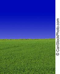 Sky & Grass