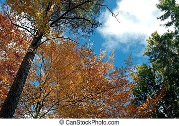 Sky in fall