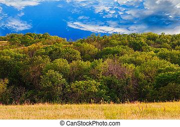 sky landscape forest field green grass summer nature blue rural meadow environment