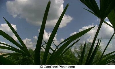 sky over a palm tree