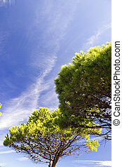 Sky over Corsica during Summer