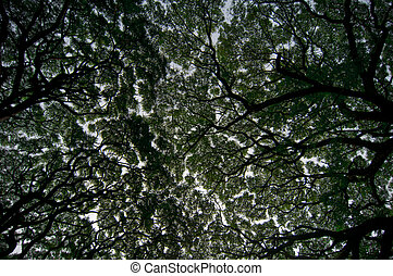 Sky puzzle - Branches of large decidous tree reaching to...