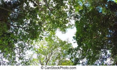 Sky through jungle trees, steadicam