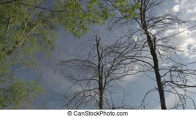Sky to Marsh Vertical Pan Down - Sky to wetland marsh...