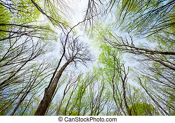 Sky view in the deciduous spring forest