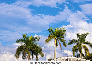 sky with palm trees and rooftop