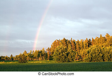 Sky with rainbow over forest