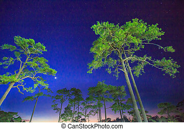 Sky with stars in night, landscape at Phukradung National...