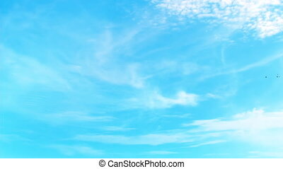 Sky with white clouds and birds in flight