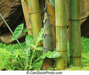 skyde, i, bamboo, regnen, skov