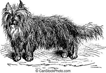 Skye Terrier or Canis lupus familiaris vintage engraving