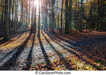 skygger, af, træer, ind, en, skov, ind, efterår