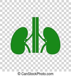 skylt., mörk, bakgrund., grön, mänsklig, njurarna, transparent, ikon