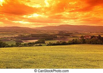 skyn, äng,  sky, grön,  under, solnedgång