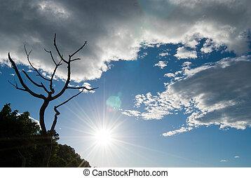 skyn, solsken, och, skallig, träd