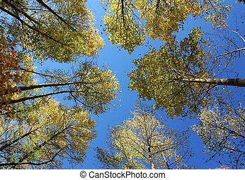 Sky\\\'s the limit - Trees in a forest reaching towards the...