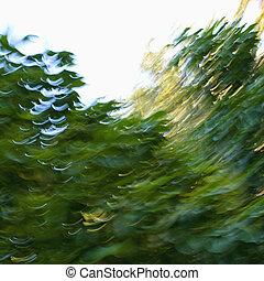 slør, abstrakt, træer.