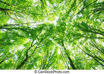 sløret, gamle, skov