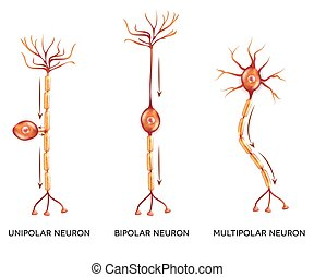 slagen, neuron
