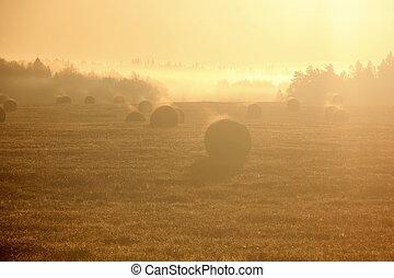 Slanted field. Hay piles.