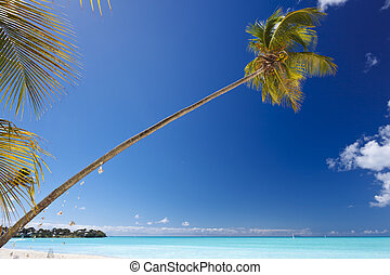 Slanted Palm Tree At Caribbean Beach, Antigua