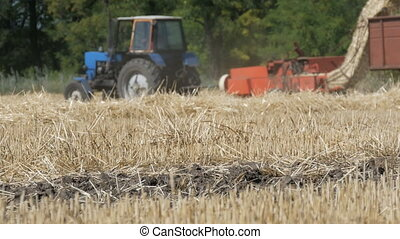 Slanting wheat in a background rides the tractor and mows...
