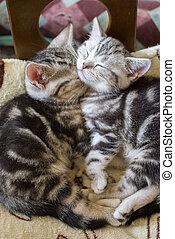 slapende, zo, katjes