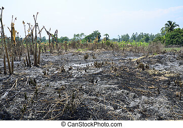 Slash and burn cultivation in the country of Thailand