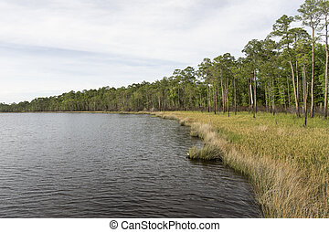 Slash Pine Forest and Sawgrass Habitat at Tarkiln Bayou...