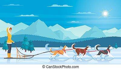 sleddog, illustrazione, huskies