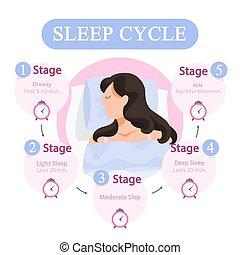 Sleep cycle infographics. Stage of sleep during