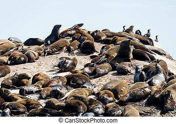 Sleeping and Sunbathing Seals on Cape Town's Shores