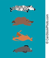 Sleeping animals set 2. Zebra and bear. Walrusl and kangaroo. Wild animal sleeps. Sleepy beast